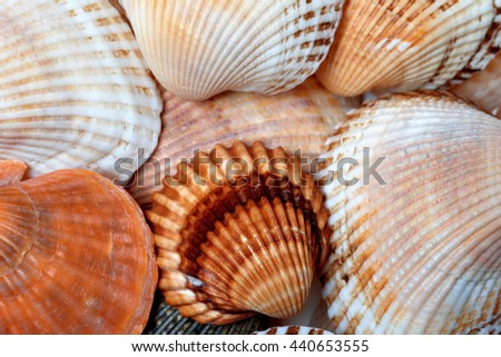 Shells of anadara and scallop. Natural background. - stock photo