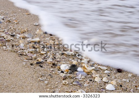 Shells on a beach in tropical Queensland/Australia