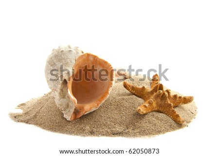 Shells on a pile of sand isolated over white - stock photo