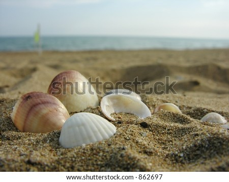 shells on a sand - stock photo