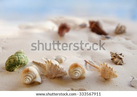 Shells on beach. - stock photo