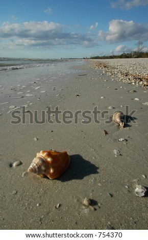 Shells on Florida Beach - stock photo