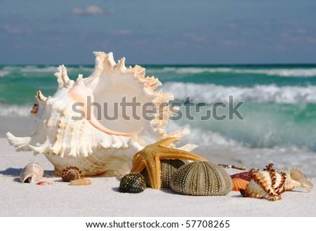 Shells on Gulf Coast Beach - stock photo