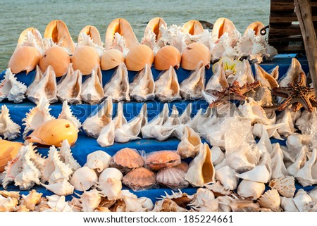 shells on sale  in India - stock photo