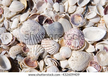 Shells on Sanibel Island, Florida - stock photo