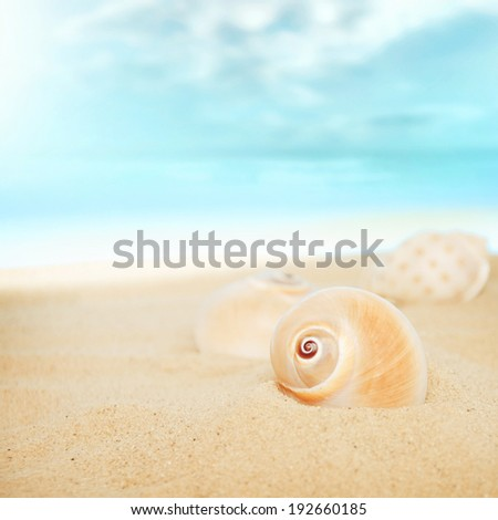 Shells on the beach. - stock photo