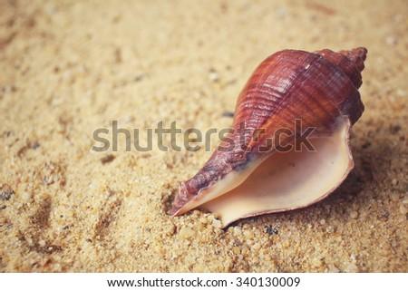 Shells on the beach - stock photo