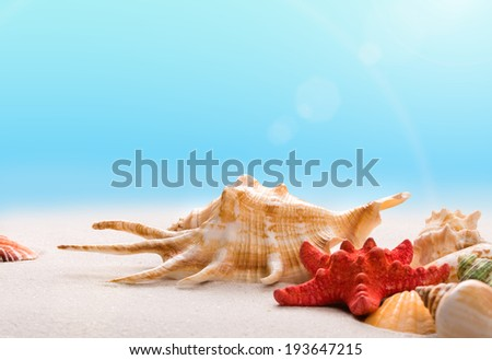 Shells on the beach in a sand, with a sky and sunbeam - stock photo