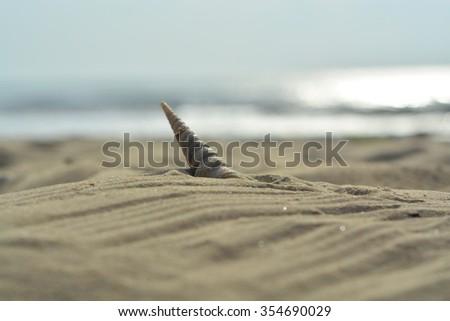 Shells on the beach sand - stock photo