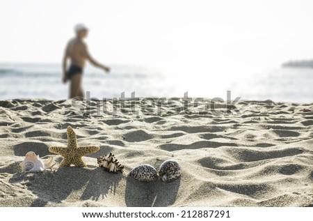 Shells on the beach. Sun light - stock photo
