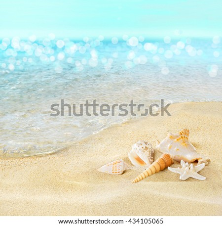 Shells on the seashore. - stock photo