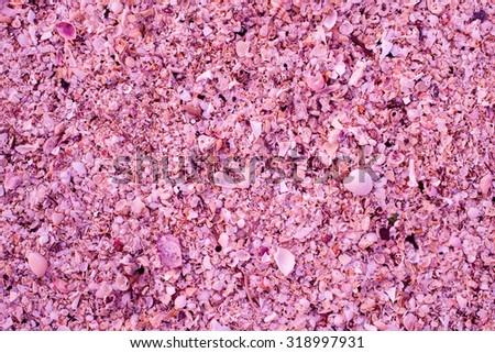 Shells - pink - sand - stock photo