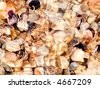 Shells under rippled water background - stock photo