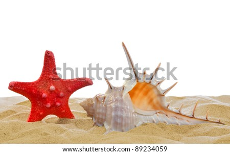 shells with starfish on the sand