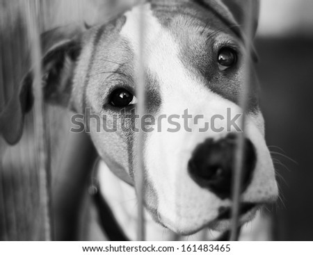 Shelter for dogs - stock photo