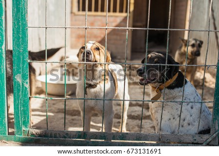 Shelter for homeless dogs. Selective focus