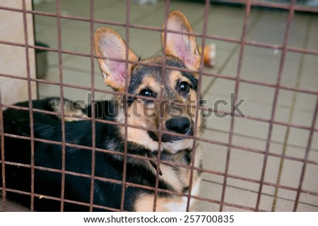 Shelter for homeless dogs, waiting for a new owner - stock photo