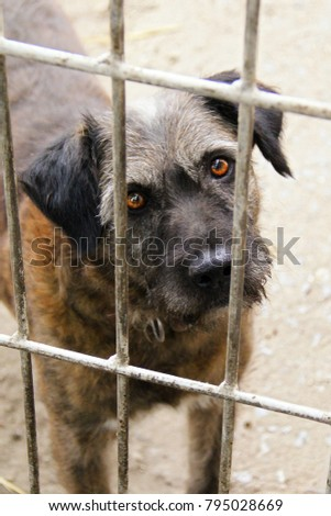 Shelter homeless dog in kennel cage. Abandoned dog in animal shelter looking through fence wonder if anyone take home. Locked sad dog behind shelter bars. Homeless dog looking out in wire of shelter