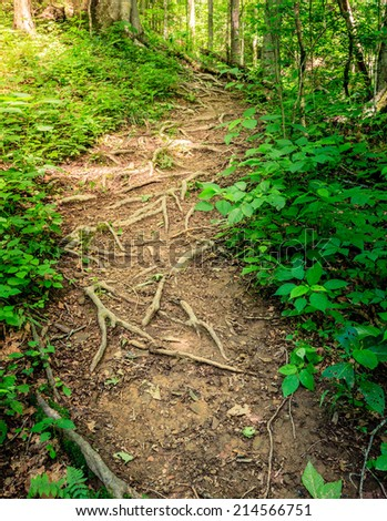 Sheltowee Trace trail in Red River Gorge, Kentucky. Daniel Boone National Forest - stock photo