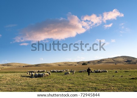 shepherd and his flock of sheep in a prairie of the central Anatolia  under a big cloud in the blue sky at the evening - stock photo