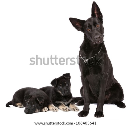 Shepherd and puppies - stock photo