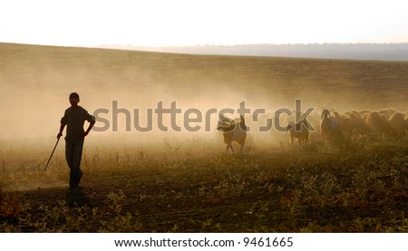 shepherd at work - stock photo