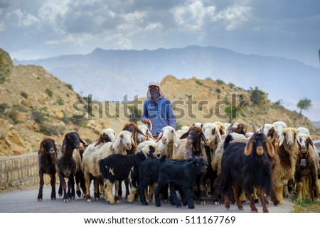 Shepherd Drives On The Mountain Route An Attara Of Sheep Desert Area