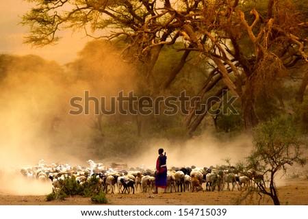 shepherd leading a flock of goats  - stock photo