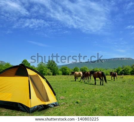 shepherd's tent horses on a mountain pasture - stock photo