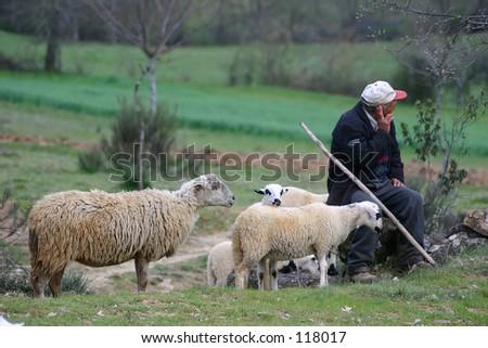 Shepherd with flock - stock photo