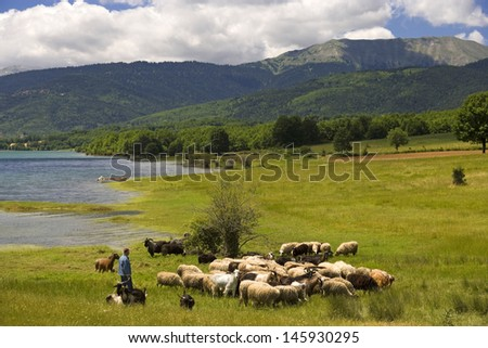 Shepherd with his sheep on a sunny meadow by a lake - stock photo