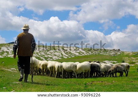 Shepherd with his sheep on pasture - stock photo