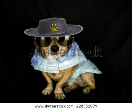 sheriff dog - stock photo
