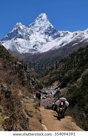 Sherpa and yak at Imja Khola River along Everest Base Camp route with view of Mt Ama Dablam, Khumbu, Nepal. Scenic view between Tengboche and Pangboche. - stock photo