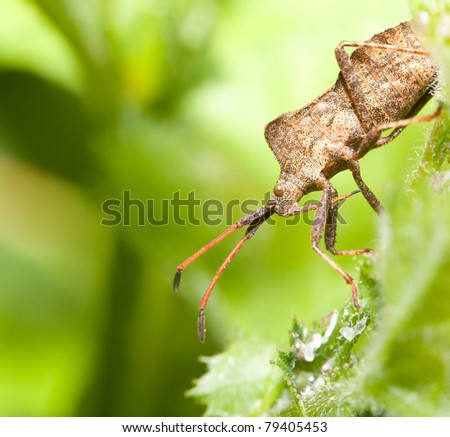 Shield-bug on a leaf. - stock photo