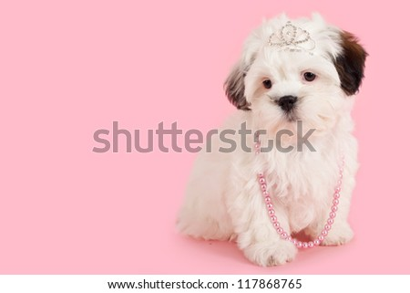 Shih Tzu Maltese cross with crown and neckless