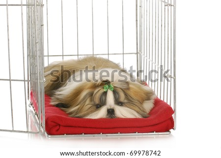 shih tzu puppy laying in dog crate on red blanket