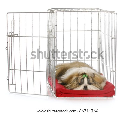 shih tzu puppy laying in open dog crate with reflection on white background - stock photo