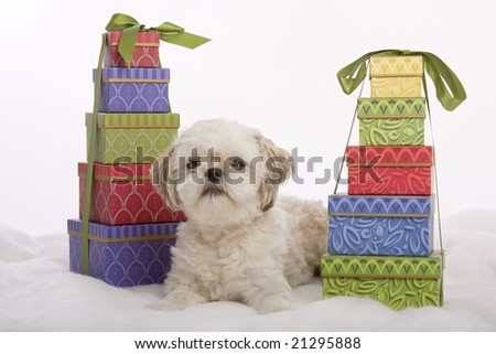 Shih tzu puppy sitting between two stacks of boxed Christmas presents - stock photo