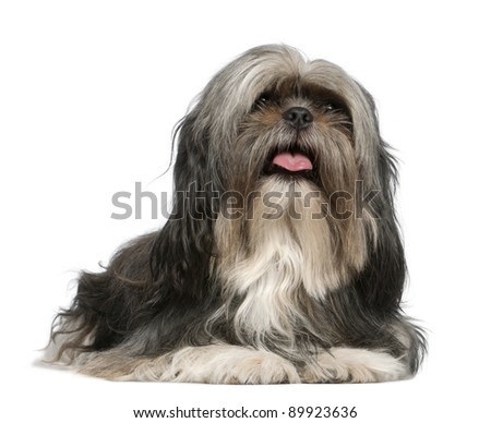 Shih Tzu, 5 years old, lying in front of white background - stock photo