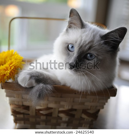 Shii-chen found a comfy basket to hang out in (the photographer found the flower). - stock photo