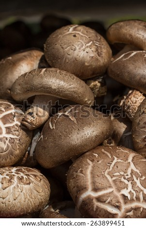 Shiitake mushroom at a farmers market in Seoul korea