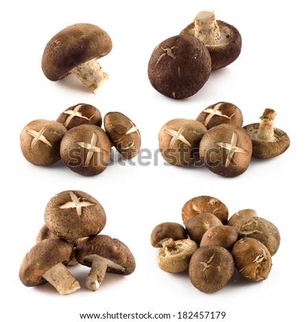 Shiitake mushrooms (Lentinula edodes). - stock photo