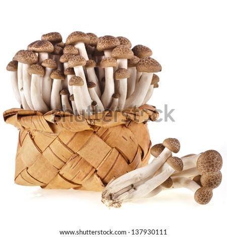 Shimeji mushroom in the basket close up isolated on white background - stock photo