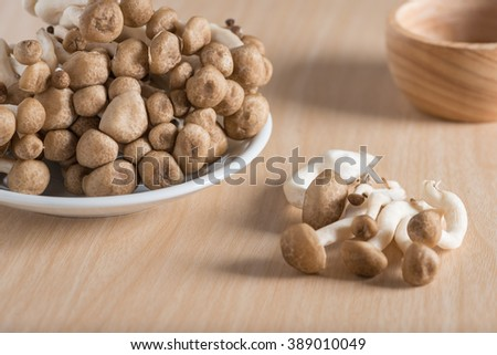 Shimeji mushrooms brown varieties. - stock photo