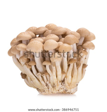 shimeji mushrooms brown varieties on white background. - stock photo