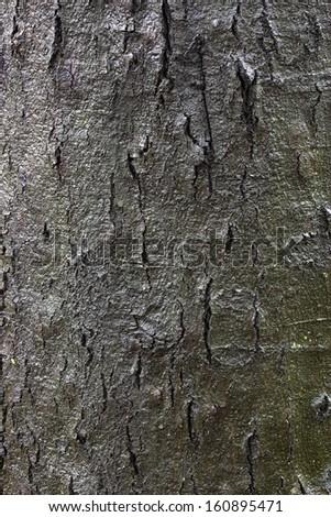 shine of bark - stock photo