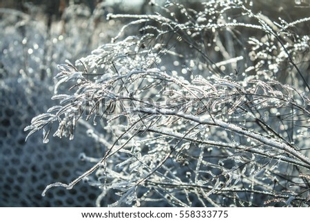shining frost on the twigs in bright sunshine