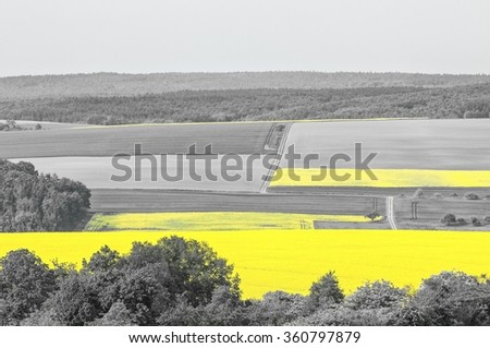 """Shining yellow oilseed rape field in a black and white landscape. This picture is part of my successful color-key series """"Black and Yellow"""". - stock photo"""