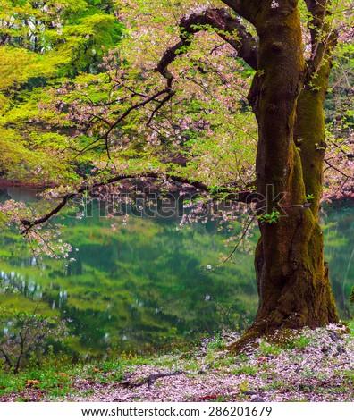 Shinjuku National Garden, Tokyo, Japan - stock photo